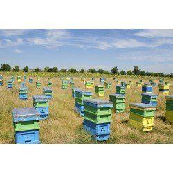 50x bee hive