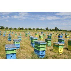 Support for 50x bee hive