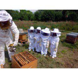Online beekeeping vourse