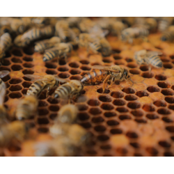 Bienenrettung