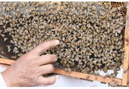 How To Identify A Queen Bee