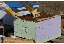 Wooden beehives vs. Plastic beehives