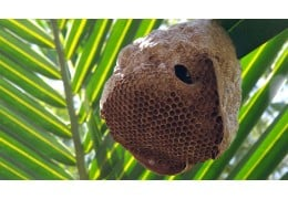 Types Of Bee Nests